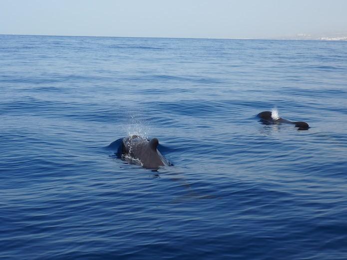 Obserwowanie wielorybów z katamaranu (podobno zazwyczaj widać także delfiny).