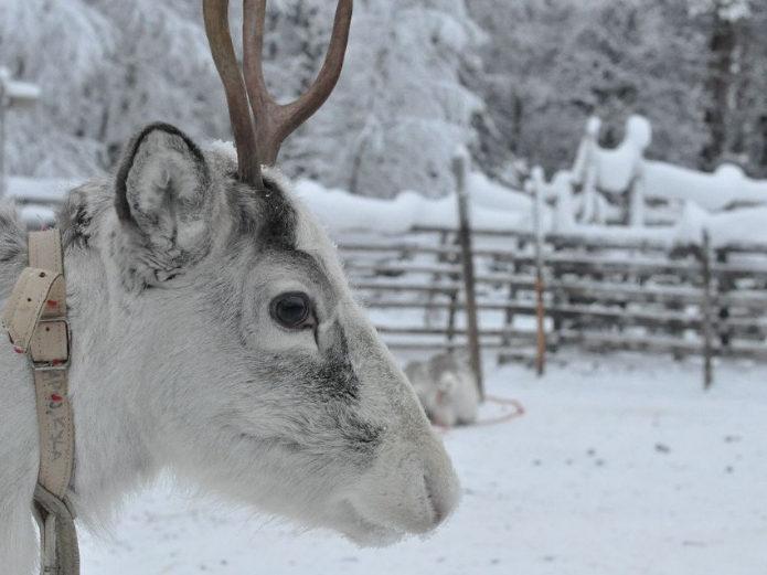 jak zobaczyć zorzę – finlandia 2012
